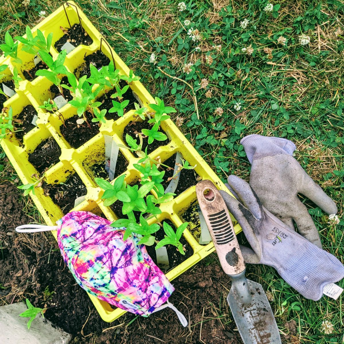 Surviving Quarantine - Bunny's Garden