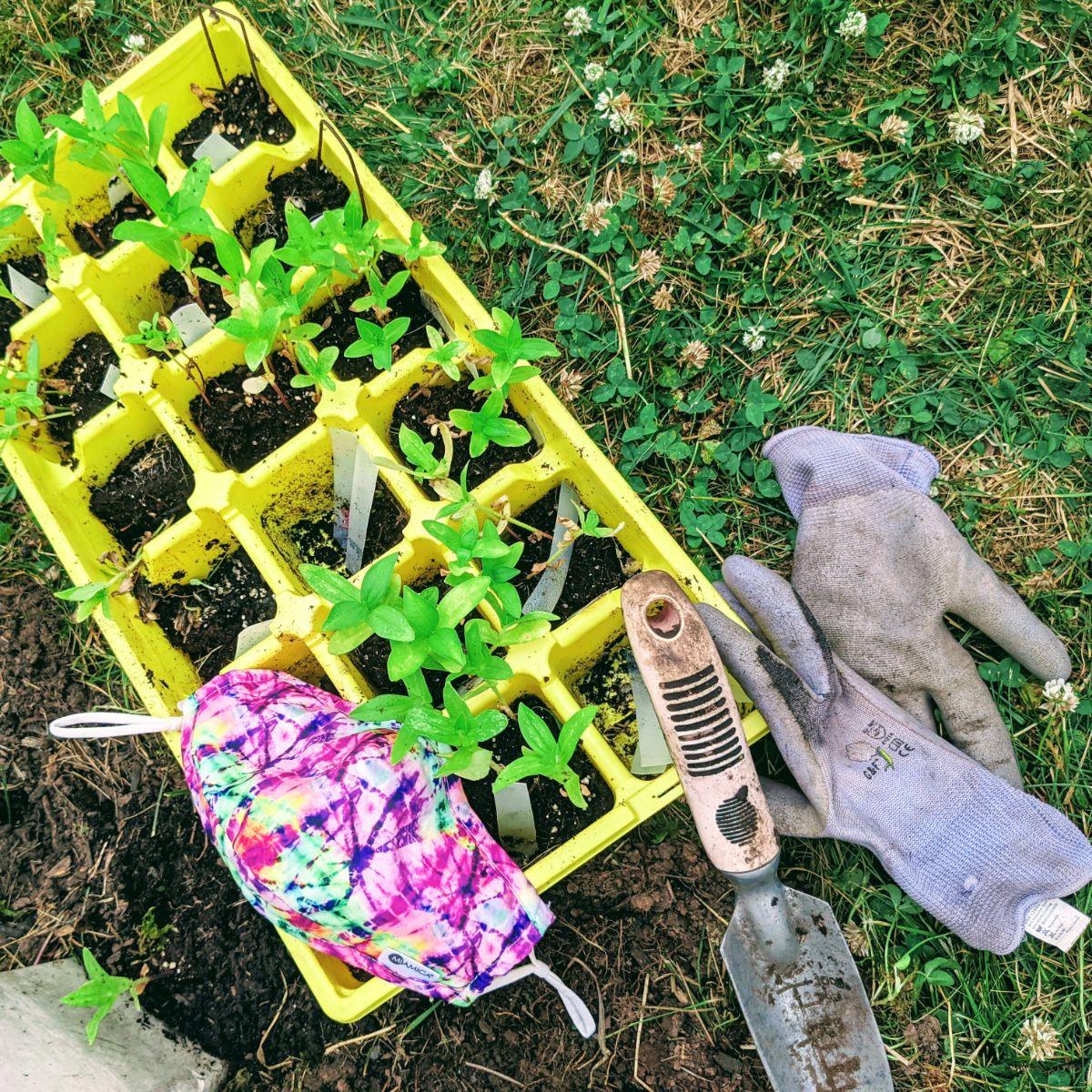 Surviving Quarantine – Gardening from Seed