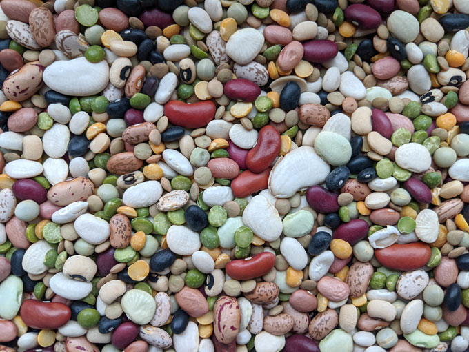 Mixed Dry Beans for Planting