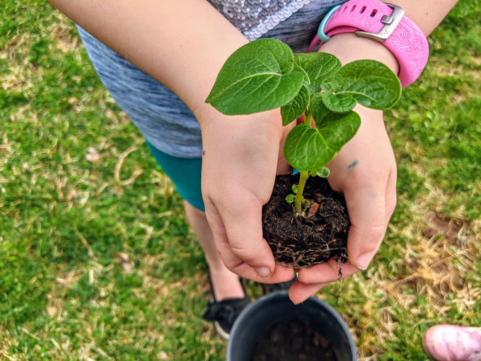 Planting with Preschoolers and School-Aged Kids