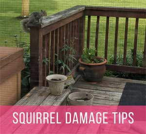 Squirrel Damage Prevention Tips for the Garden