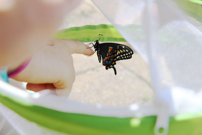Butterfly Enclosure on Amazon