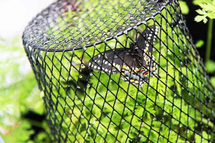 Butterfly in Wire Waste Basket