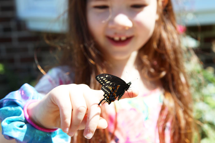 Raising Swallowtail Butterfly