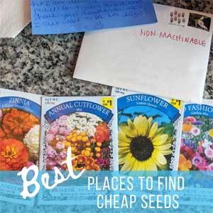 Best Places to Get Cheap Seeds for Gardening