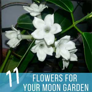 11 Moon Garden Flowers for Evening Allure