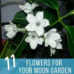 11 Moon Garden Flowers