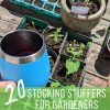 20 Best Stocking Stuffers for Gardeners - Photo of Blue YETI wine cup and containers of seedlings growing on a wooden deck