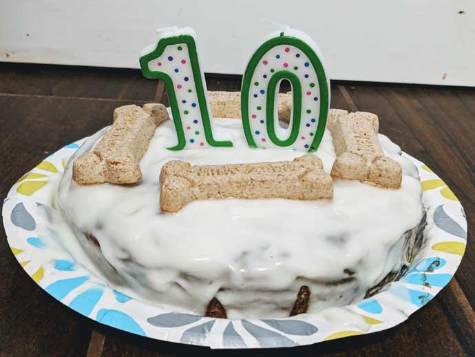10th birthday cake - Dog eating cake for birthday - Milkbones on a white liver cake
