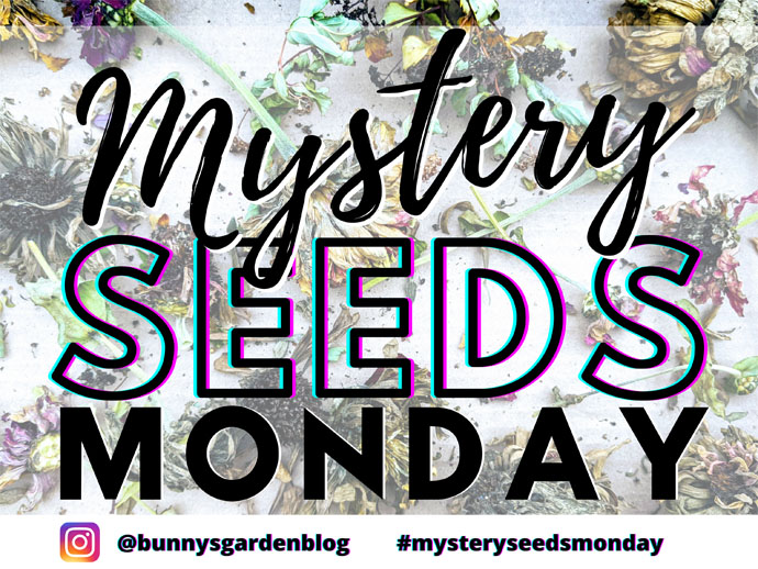 Mystery Seeds Monday Free Instagram Seed Swap for Gardeners - Graphic with Dried Zinnia Flowers and text