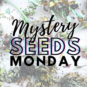 Mystery Seeds Monday – Amazing Free Seed Swap