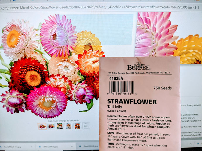 Strawflower seeds packet next to photo of pink and orange blooms.