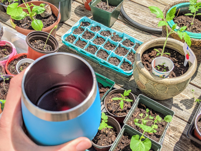 Enjoying a Glass of Wine while Hardening off Seedlings on the Deck in the Sun