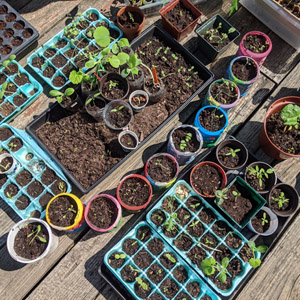 Hardening off Seedlings before Transplanting (6 Easy Hacks)