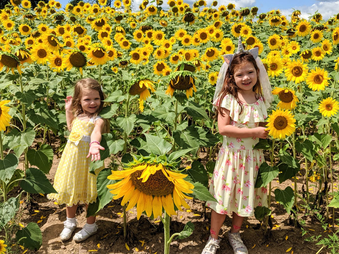 Little Girls Posing with Sunflowers in a Field