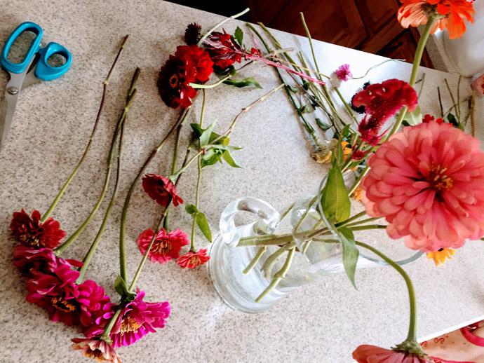 Fresh-Cut Zinnias and a Vase