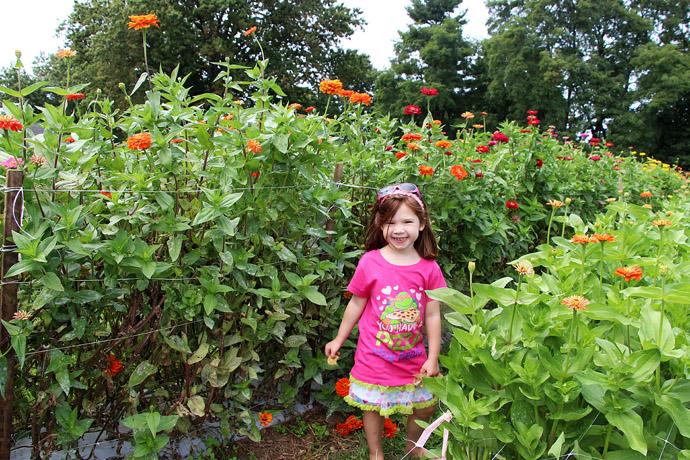 Little Girl in Field of Zinnias for Cut Flowers