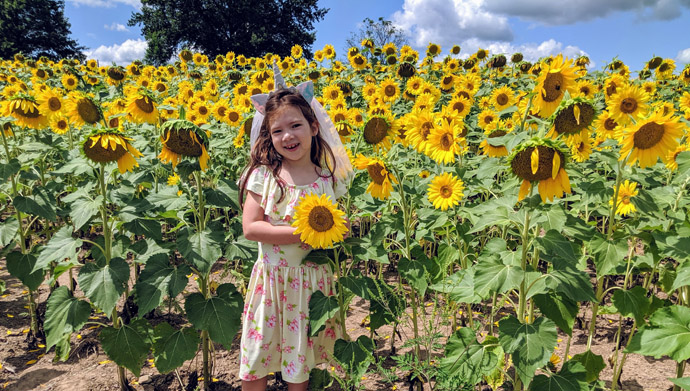 Young Girl in a Sunflower Field wearing a dress and holding a flower