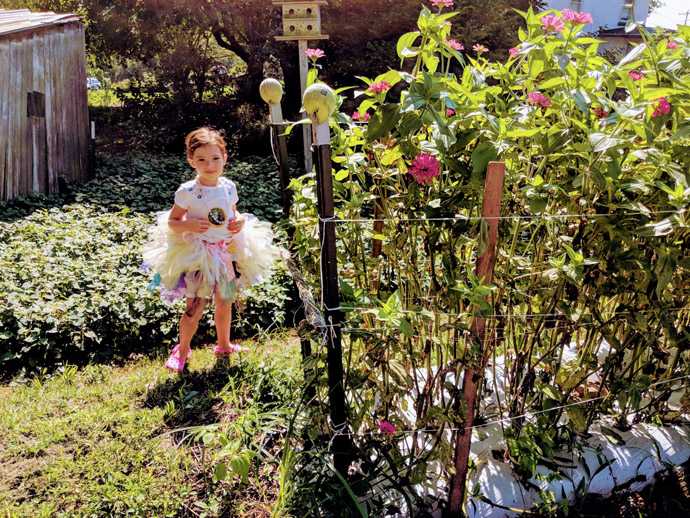Little Girl in Tutu Picking Fresh Zinnias in a Field