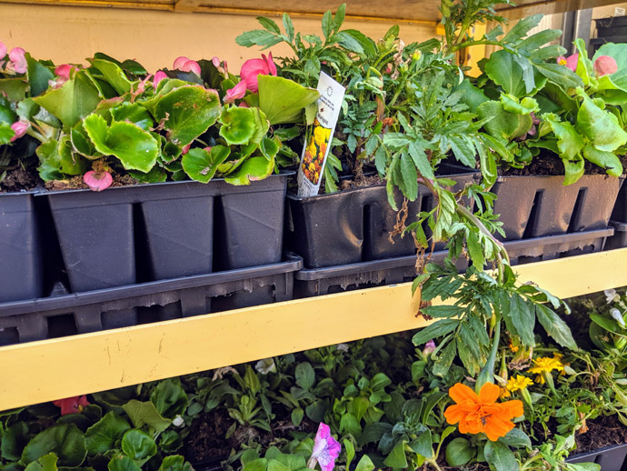 Orange Marigold and Yellow Marigolds for Sale at Produce Junction
