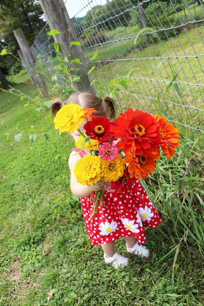 Picking Cut and Come Again Zinnias - Little Toddler Girl Holding Bouquet