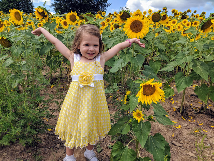 Look at all these Sunflowers! Little girl in yellow dress raises arms in a sunflower field