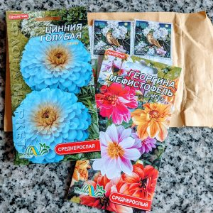 Are There Blue Zinnias? We Bought Some Seeds…