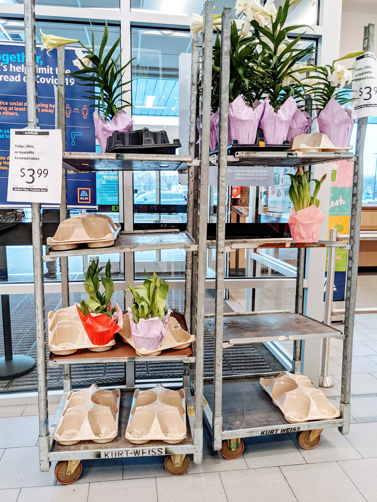 Aldi Live Flowers Garden Plants Tulips, Lilies, Hyacinths at Pottstown Aldi on Shoemaker Road in April 2021