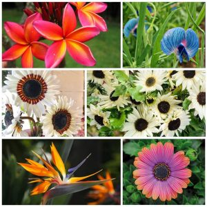 10 Etsy Favorite Garden Seeds Must-Haves!