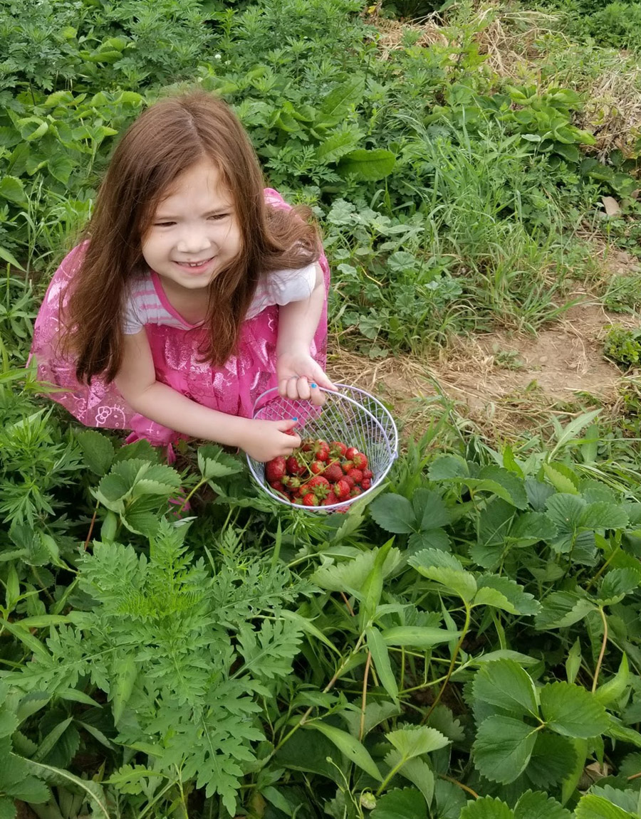 How to pick strawberries with kids - little girl in a strawberry patch