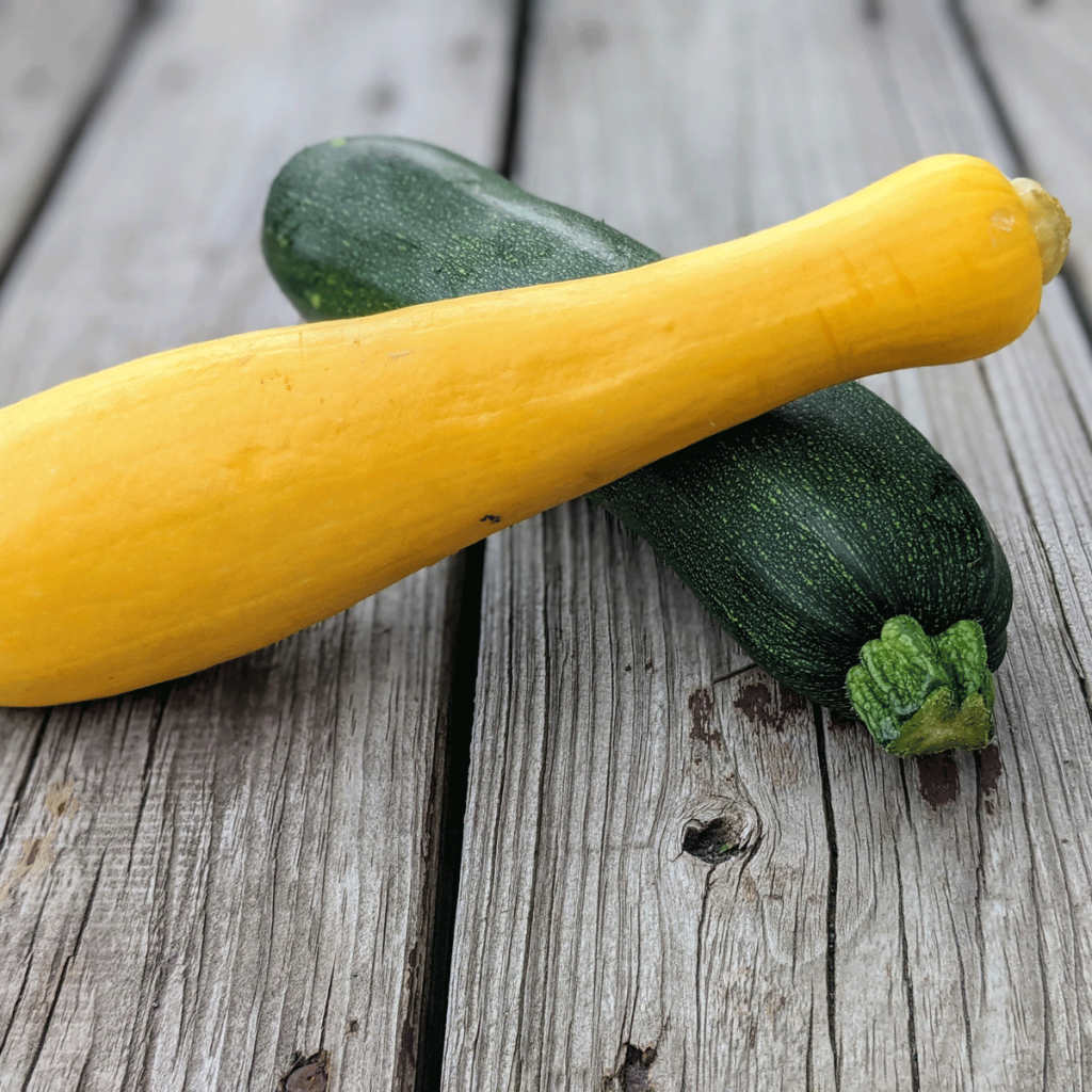 How to Defeat Squash Vine Borer - Photo of Yellow Summer Squash and Green Zucchini