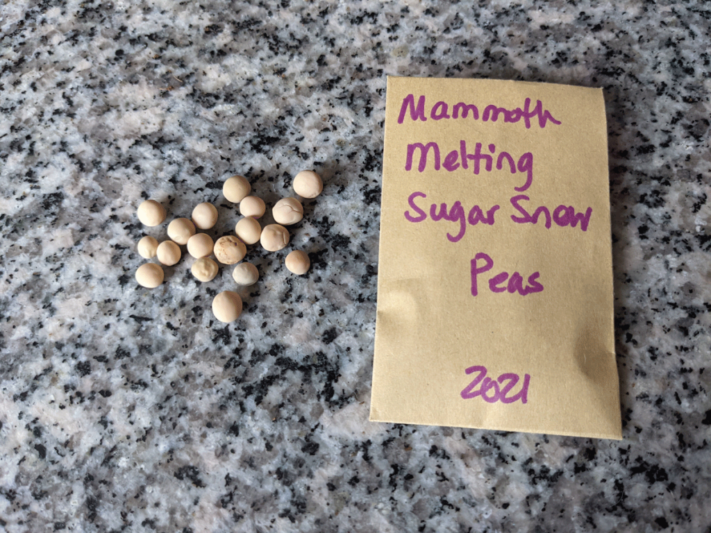 What Do Snow Pea Seeds Look Like? These Mammoth Melting Snow Peas are on a granite table next to the packet.