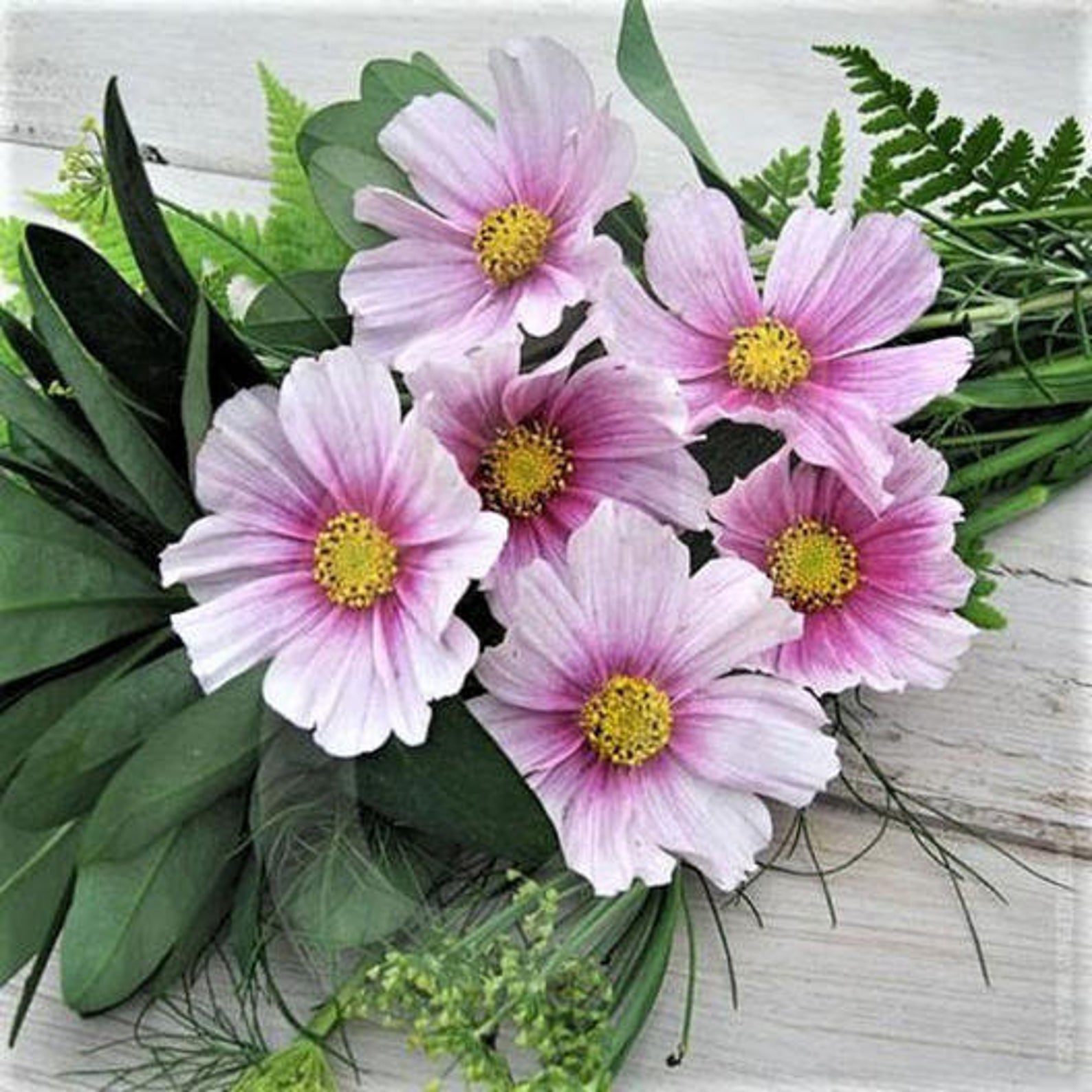 Daydream Cosmos Seeds - beautiful white with pink and yellow centers, available for sale on Etsy. Photo courtesy of seller, DaisyHeader. https://tidd.ly/3iikcgp