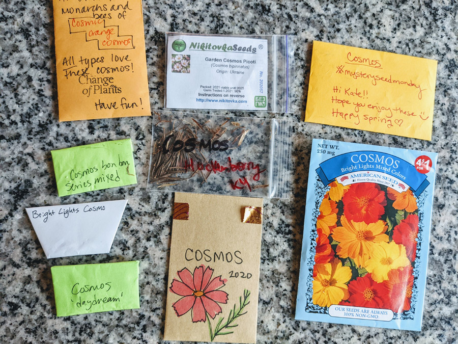 Various different seed packets of cosmos flowers - Bright Lights, Daydream, Picoti, and more