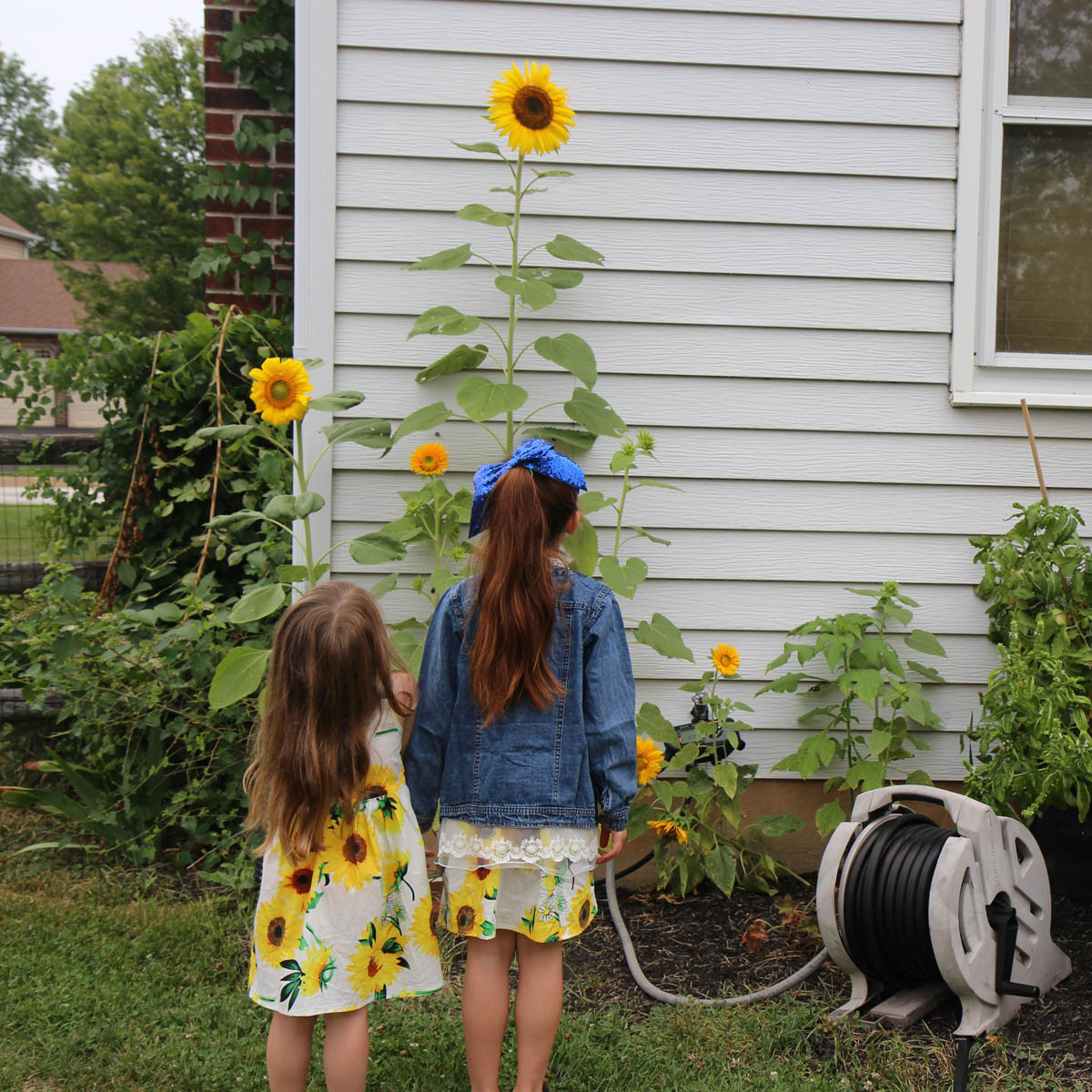 A Sunflower Dress makes the perfect garden inspired outfit for so many delightful occasions. Sweet sisters stand staring at flowers in sunflower dresses.