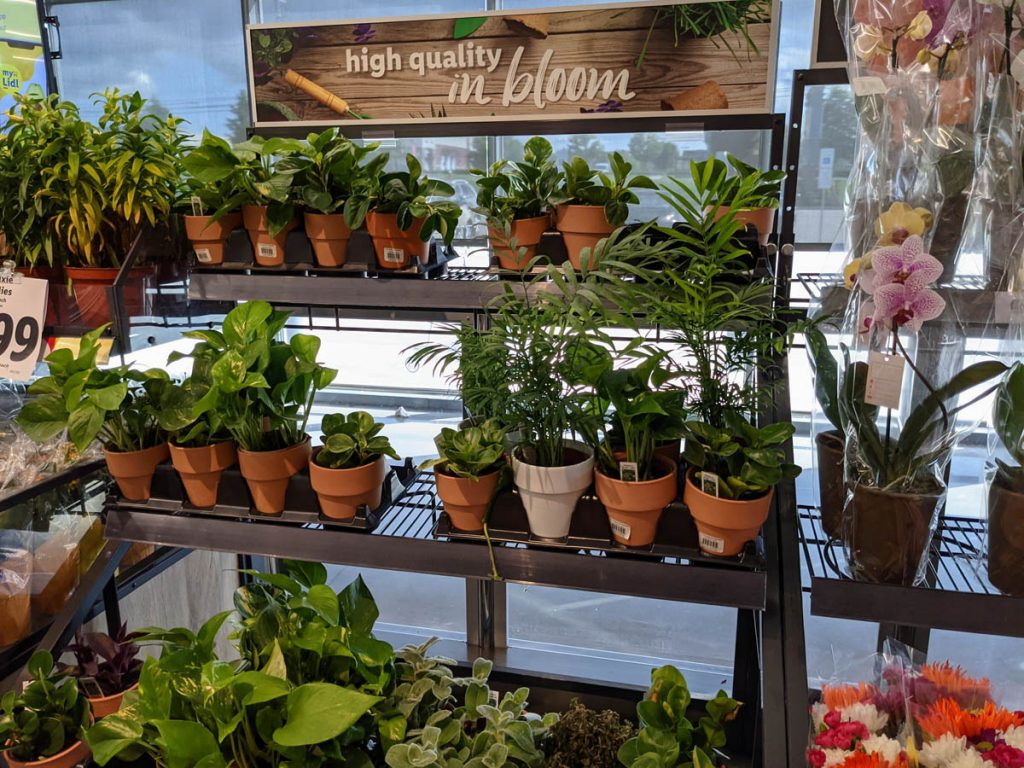 Lidl Indoor Plants for Sale - Rack with High Quality in Bloom Sign