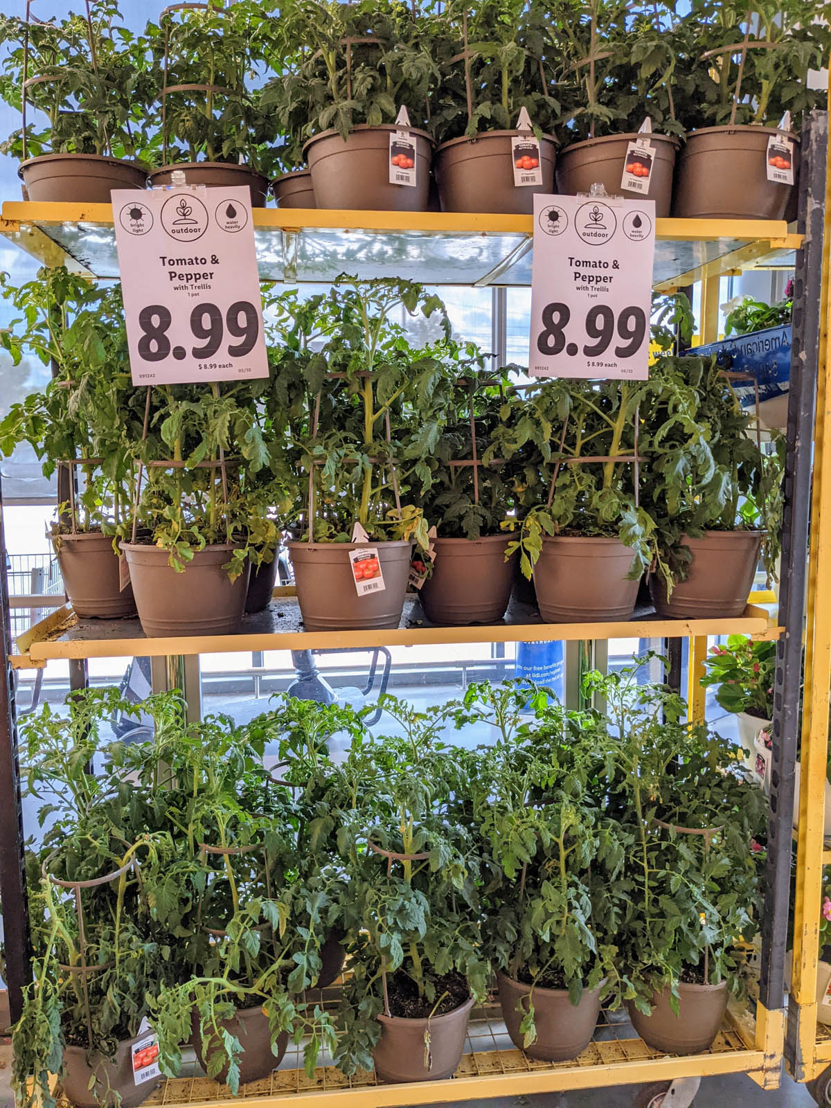 Tomato and Pepper Plants - Lidl Vegetable Plants
