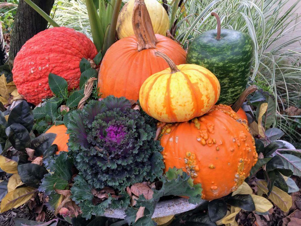 Decorative Pumpkin Arrangement outdoors