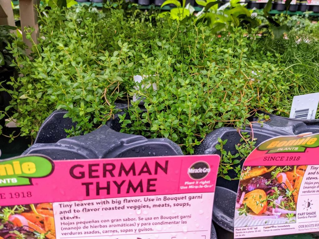 German Thyme for Sale