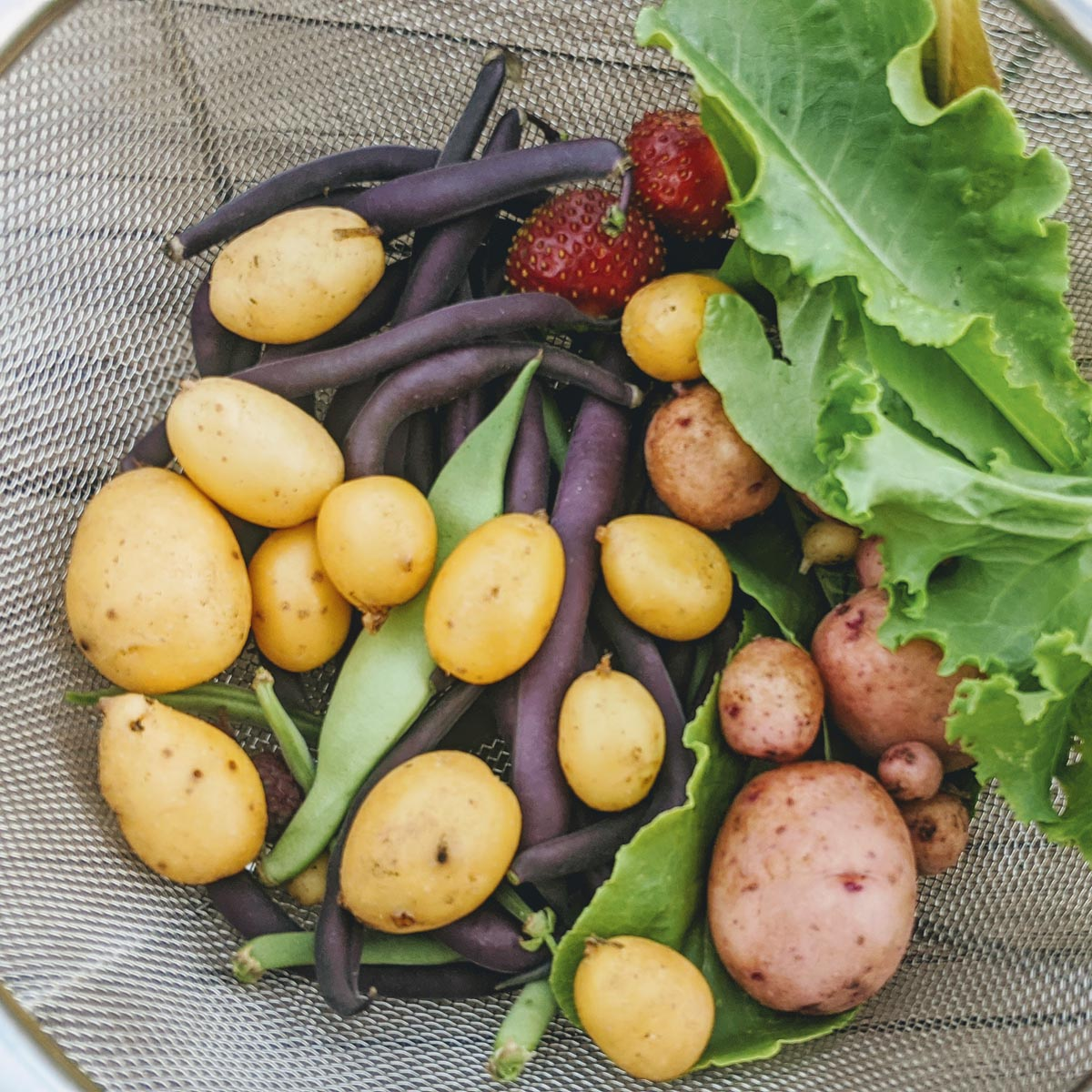 When to Harvest Potatoes & How to Grow Them