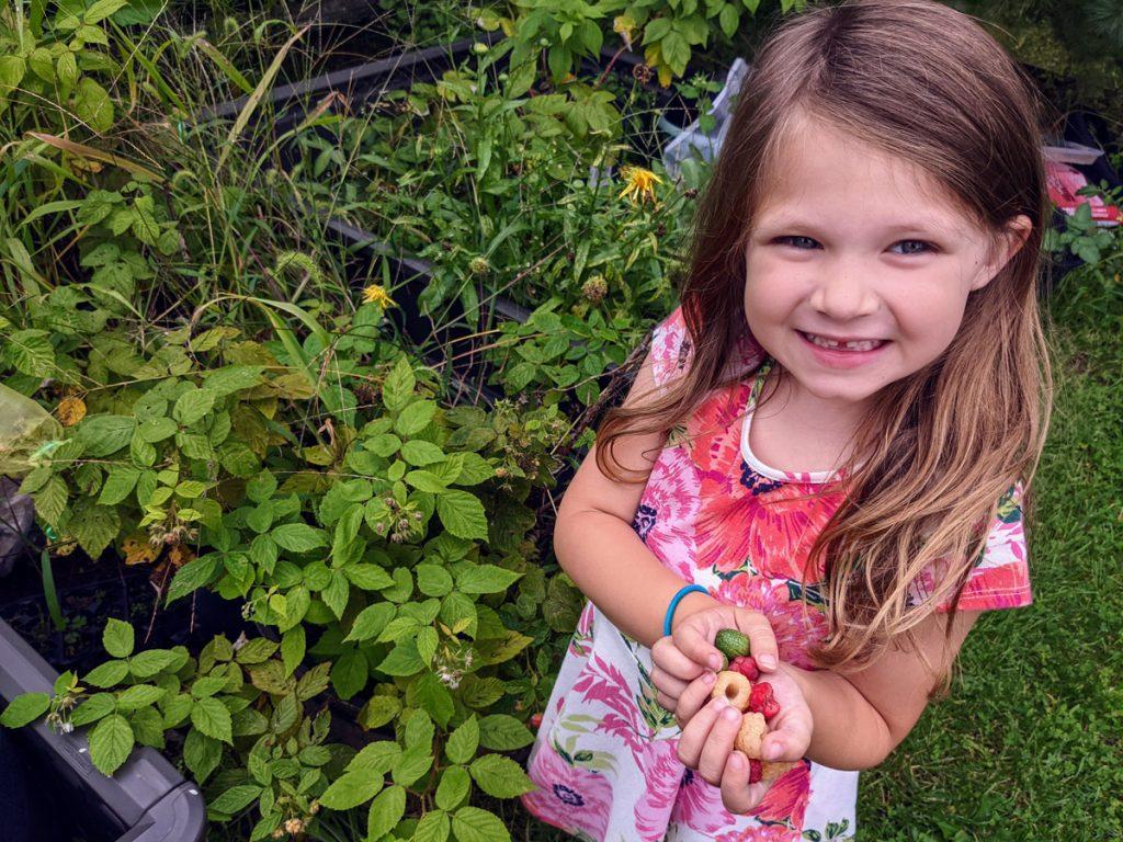 Five-year-old girl picking raspberries