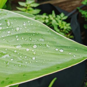 20 Rainy Day Garden Activities
