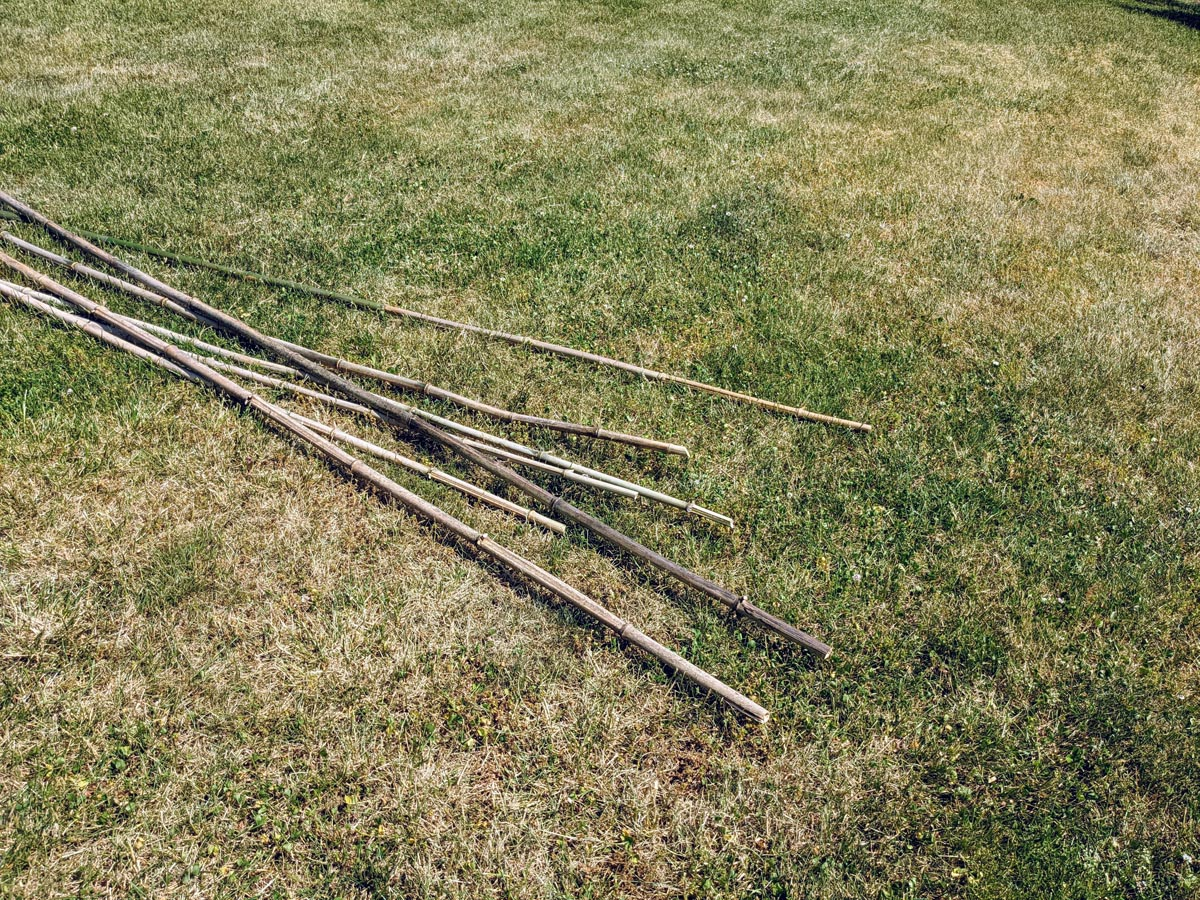 Bamboo stakes dried in the grass