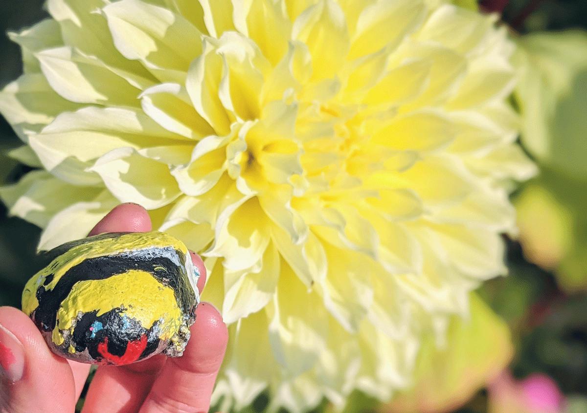 Painted Preschool Bumble Bee Art Rock with Yellow Dinnerplate Dahlia in Garden