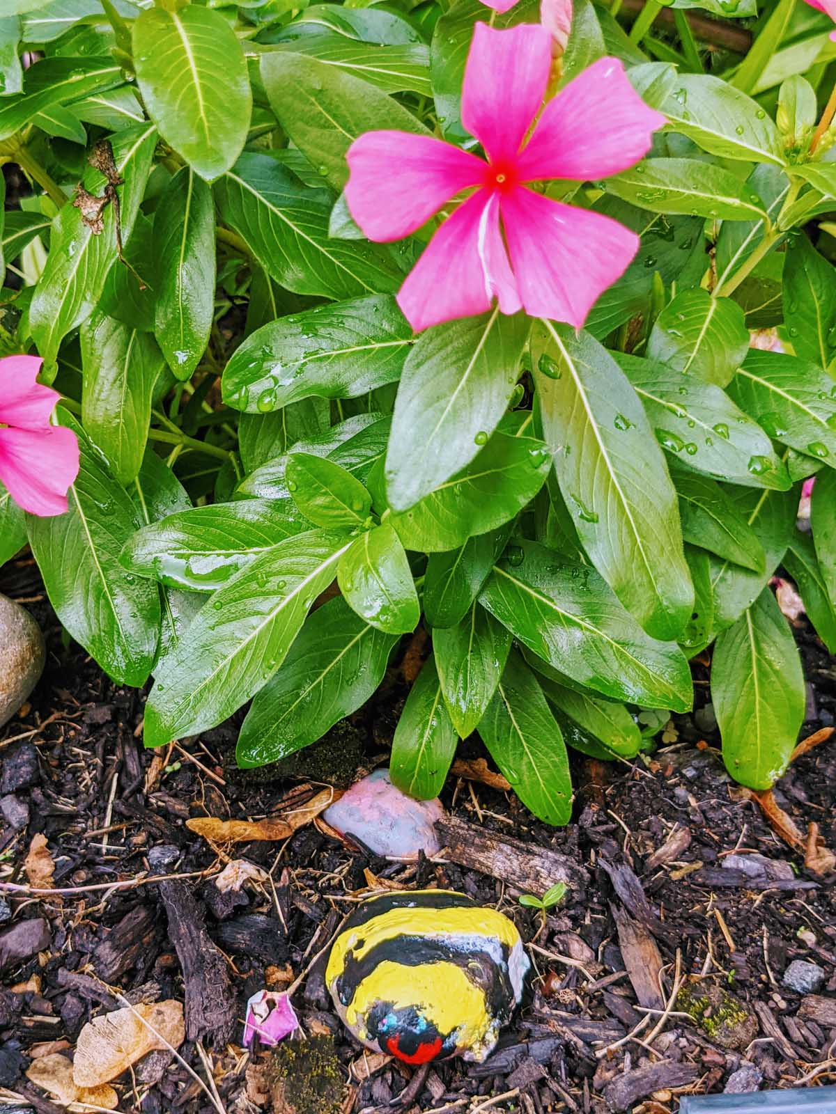 Bumble Bee Painted Rock with Pink Vinca Flower in the Garden