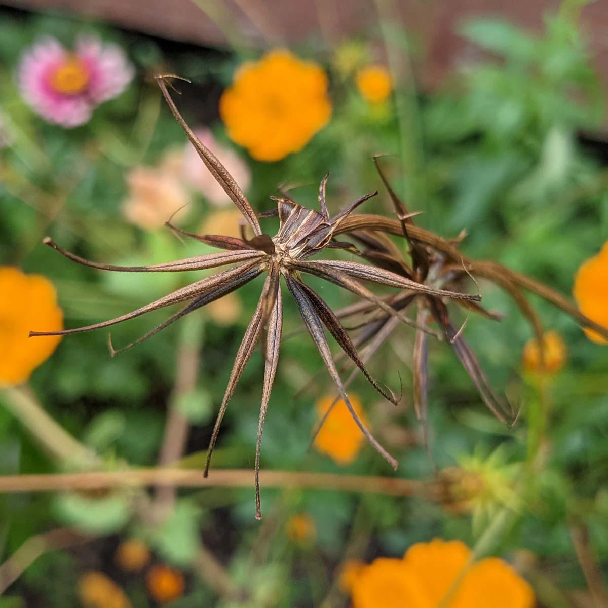 October Garden | 9 Things to Do in the Garden in October