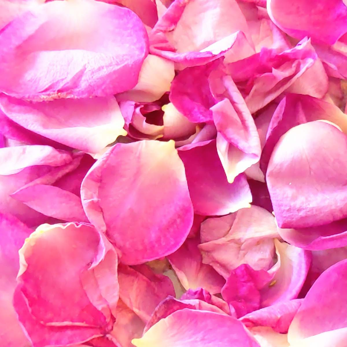 What to Do with Rose Petals   17 Rose Petal Uses