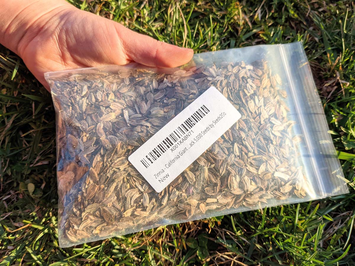 Packed of California Giants Zinnia Seeds - What Do Zinnia Seeds Look Like?