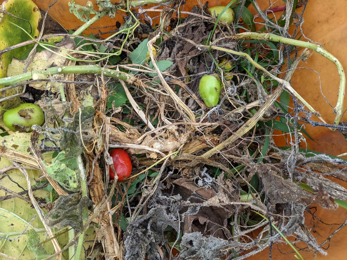 Yard Waste and Plant Refuse in Orange Bin