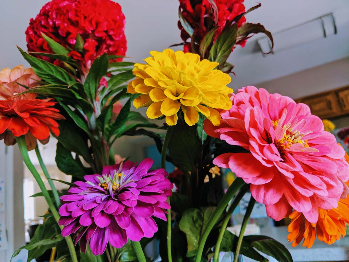 Fall Zinnia and Celosia Bouquet Indoors